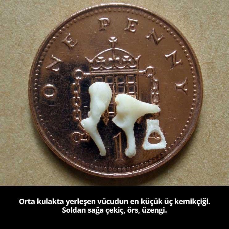Çekic Ors Üzengi - Prof. Dr. Çetin Vural
