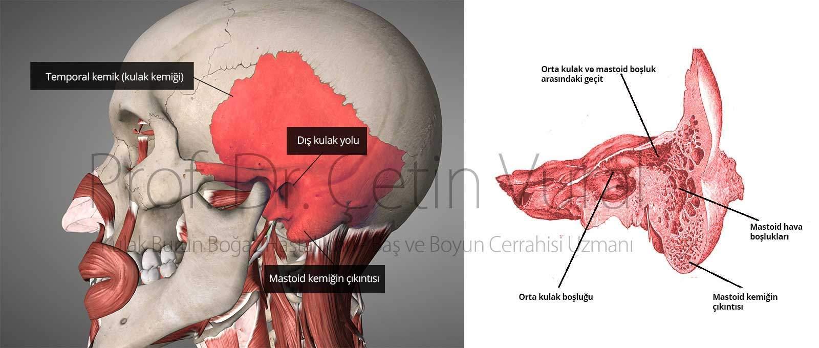 Temporal Kemik Anatomi - Prof. Dr. Çetin Vural