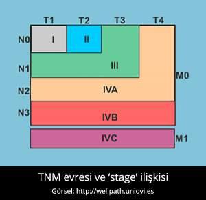 TNM Evrelemesi - Prof. Dr. Çetin Vural