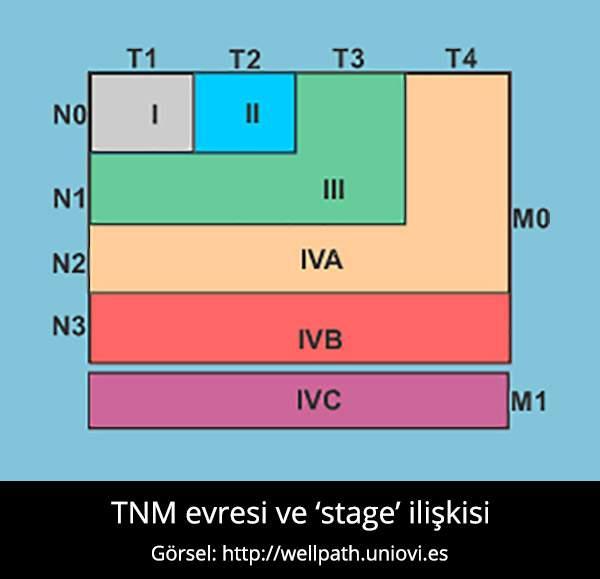 TNM Evreleme - Prof. Dr. Çetin Vural